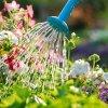Hidratação das Plantas